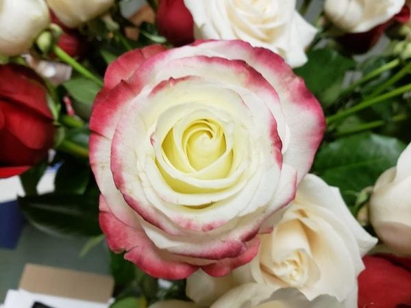 Installation's Tudor Rose All Saints' Carmel CA